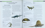 Pelycosaurs and Therapsids 1