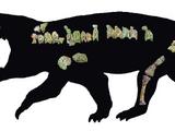 Bharitalasuchus