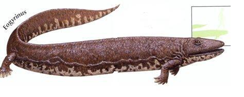 Eogyrinus