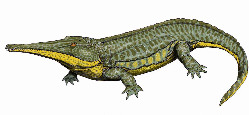 Platyoposaurus