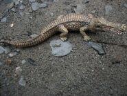 Sarcosuchus-CollectA-3-700x525