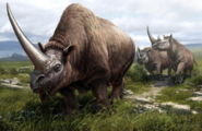 Reconstruction of three extinct rhinoceros species
