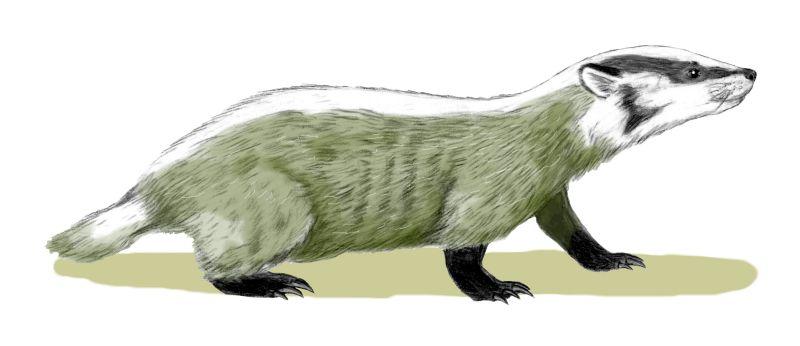 Chamitataxus