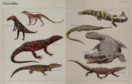 Crocodile collection