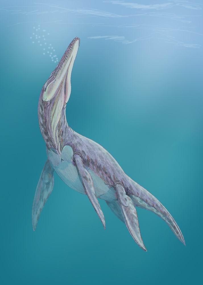 Megalneusaurus