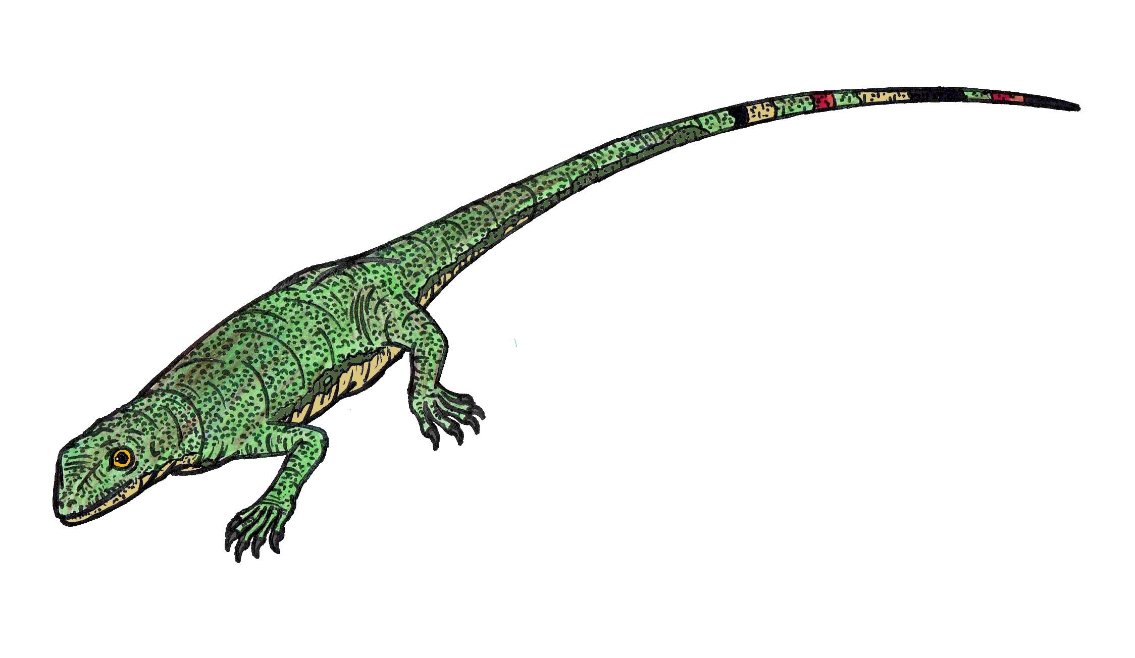 Palaeothyris