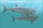 Leedsichthys problematicus restoration.png