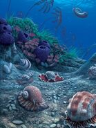 Carboniferous sea