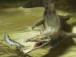Acherontisuchus