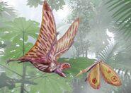 Anurognathus c19a