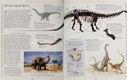 All about Apatosaurus