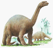ApatosauroBrontosauro di Tony Wolf