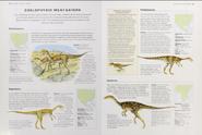 Jurassic coelophysoid meat-eaters