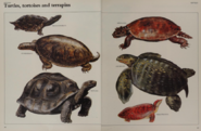Turtles tortoises and terrapins collection