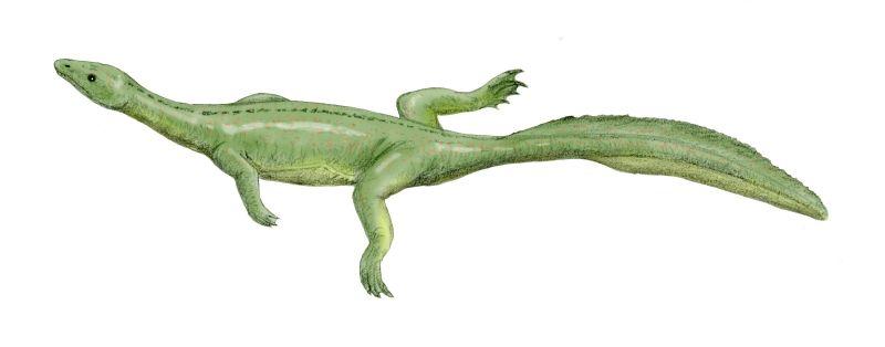 Miodentosaurus