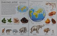 Quaternary period
