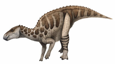Bactrosaurus.jpg
