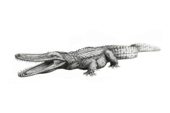 Laganosuchus