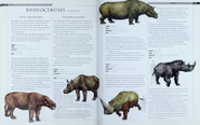 Rhinoceroses 2
