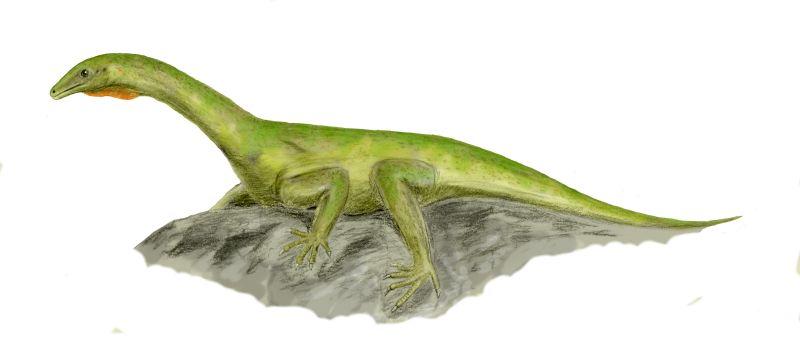 Eorasaurus