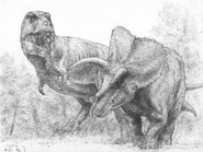 Art sketch of T-rex approaches a Triceratops
