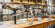 250px-Museum of Natural History Sarcosuchus