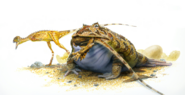 Illustration of Beelzebufo eating a baby theropod