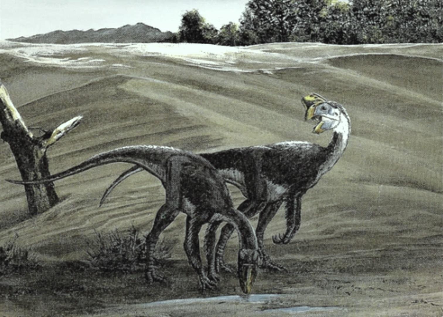 Fenestrosaurus