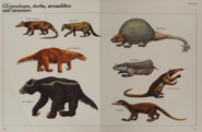 Glyptodonts, armadillos, anteaters, and sloths collection
