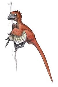 An artist's interpretation of Scansoriopteryx heilmanni