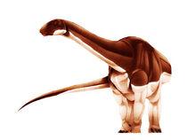 Algoasaurus-1.jpg