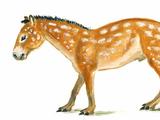 Eohippus