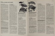 Turtles tortoises and terrapins facts