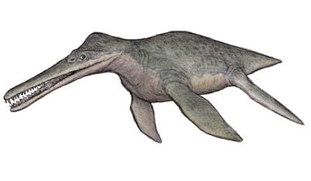 Dolichorynchops