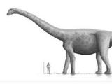 Bruhathkayosaurus/Gallery