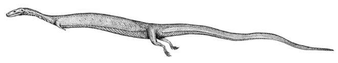 Adriosaurus