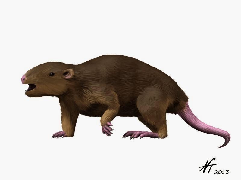Meniscoessus