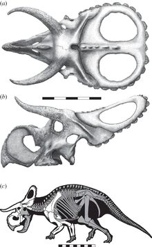 Nasutoceratops skull and skeleton.jpg