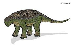 800px-Nodosaurus 500 TWA.jpg