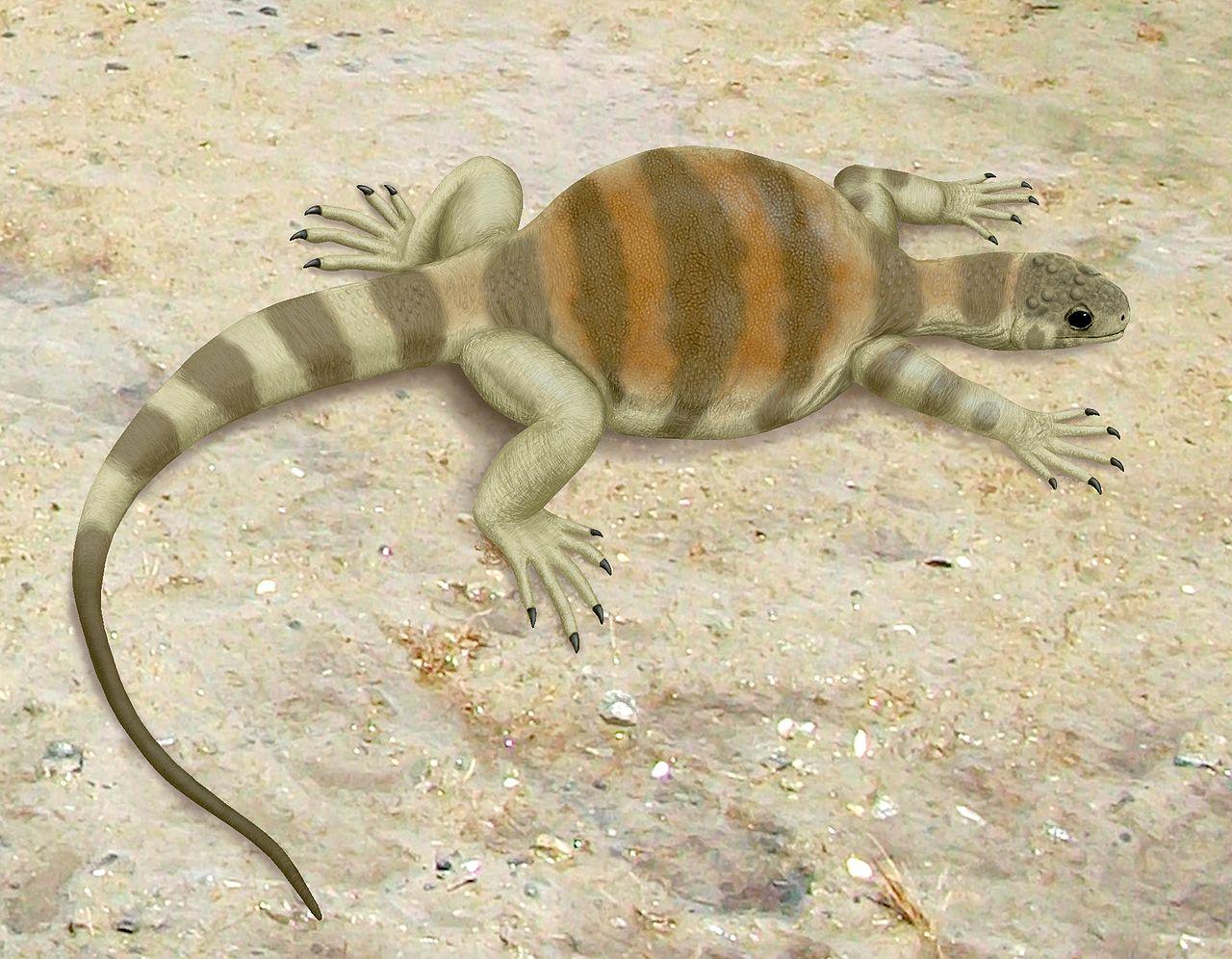 Eunotosaurus