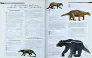 Glyptodonts, Sloths, and Armadillos 1