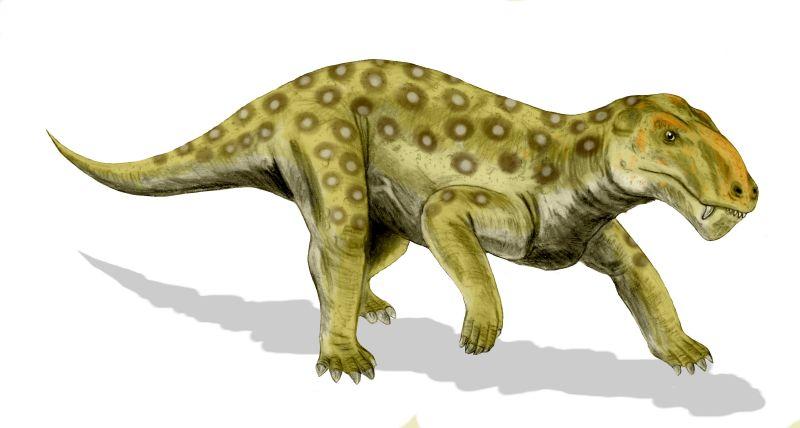 Lycaenops
