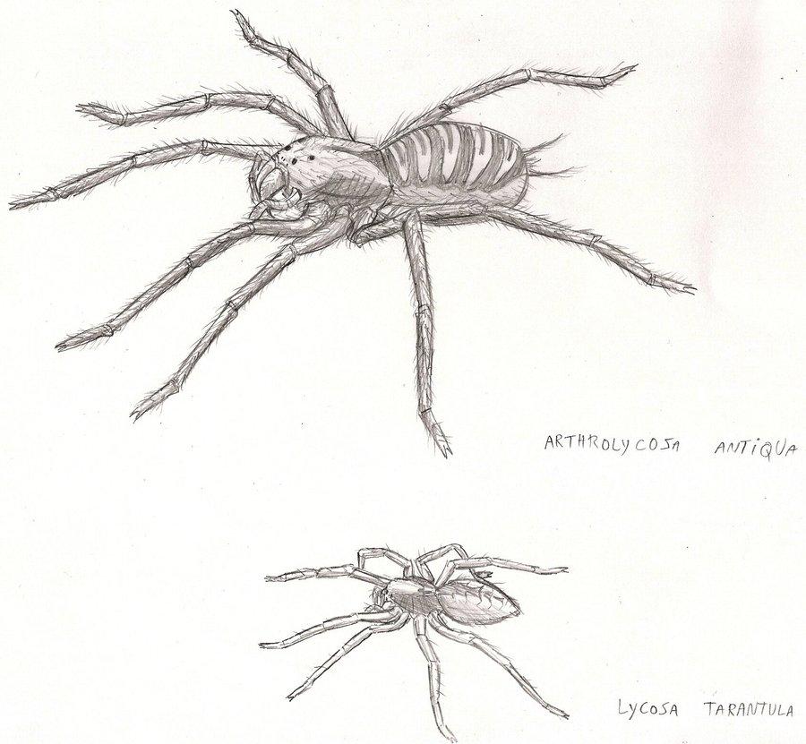 Arthrolycosa