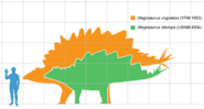 Size comparison of 2 Stegosaurus species