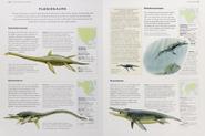 Cretaceous plesiosaurs