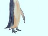 Kawhia Giant Penguin