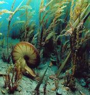 Permian marine