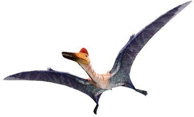 PterodactylusInfobox.jpg
