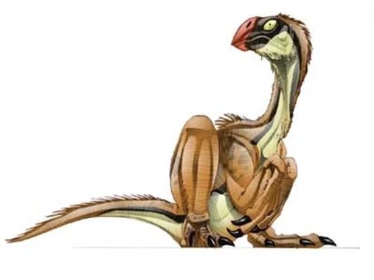 Conchoraptor