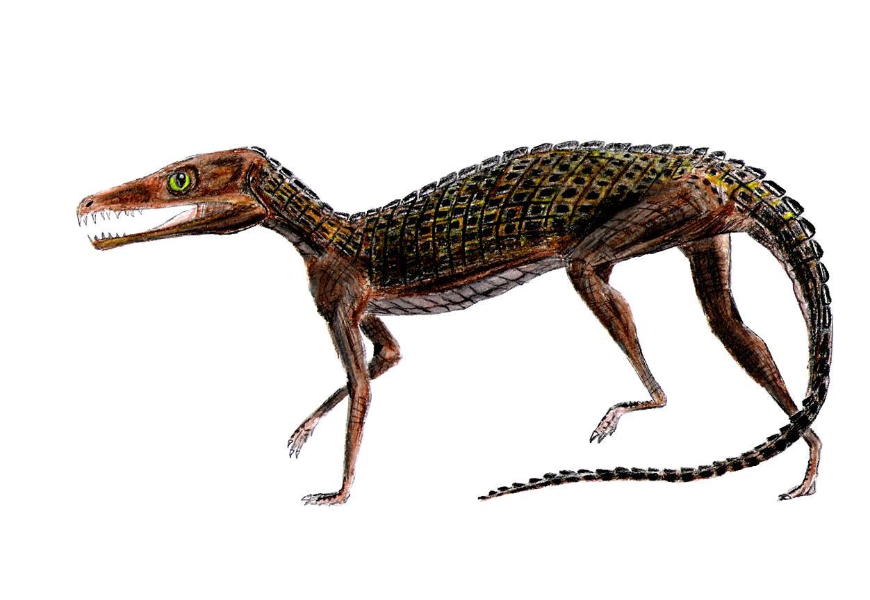 Pedeticosaurus
